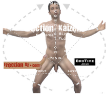 Kaizen man in style of Vitruvian man to show principles of Erection Kaizen